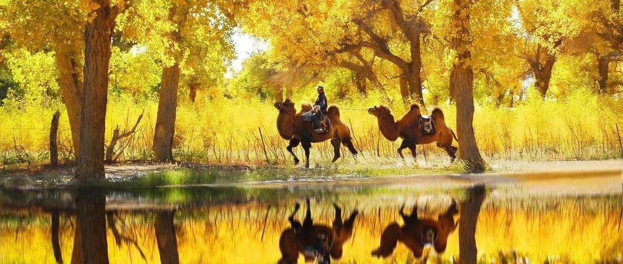 给点颜色看看,你就知道新疆有多美了!