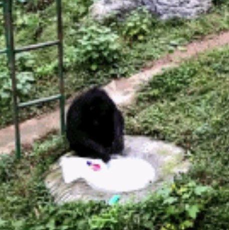 【荐读】黑猩猩为饲养员洗衣,动作娴熟!网友纷纷@自家老公