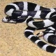 【提醒】海归女子失恋后,竟把毒蛇当宠物养!结果…