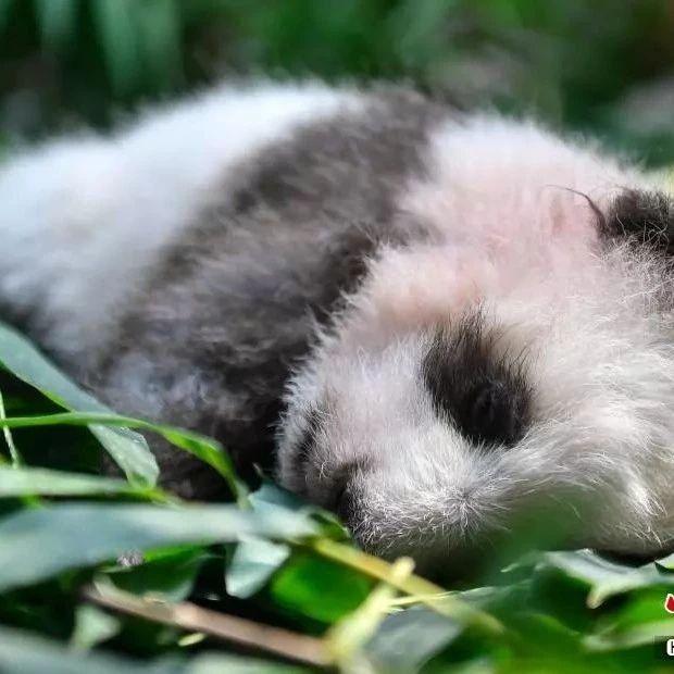 长期睡眠不足将改变基因!不是吓你…高阳人一定要注意休息,爱惜自己的身体!