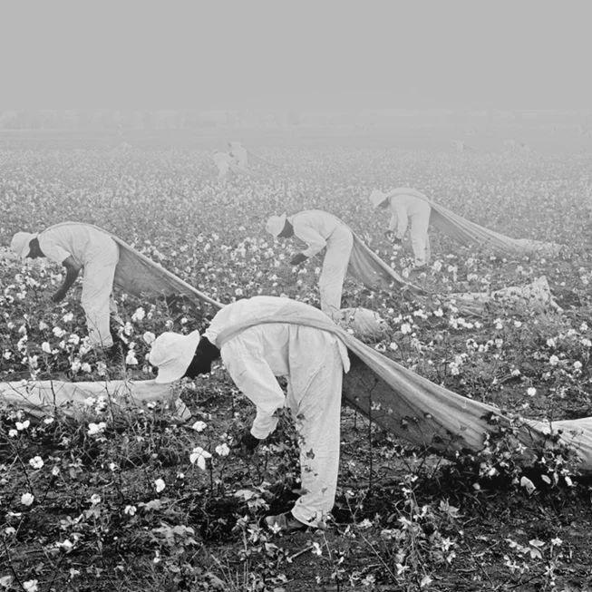 他们为什么拿新疆棉花做文章?华春莹给出标准答案