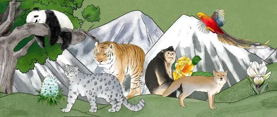 中国珍稀动植物图鉴