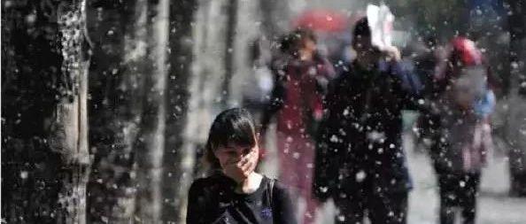 我在光山,强烈呼吁国家全面治理毛白杨,支持的传出去....