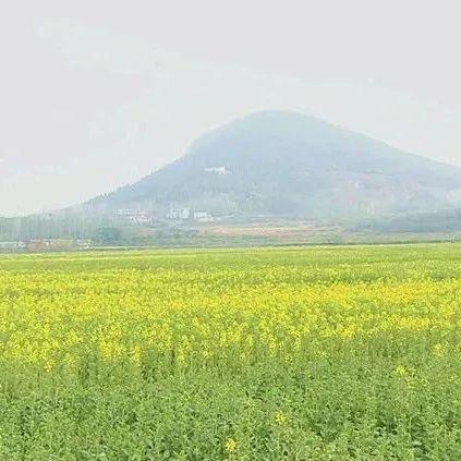 疫情防控+农旅融合!光山仙居网络油菜花节邀你观看!