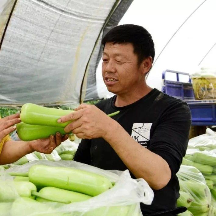 石佛寺农民种蔬菜种出致富路,一年光发工资就13万!