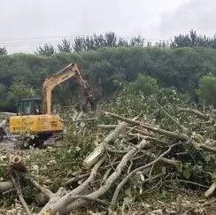 淞江路北侧杨树林都被砍了,咋回事?