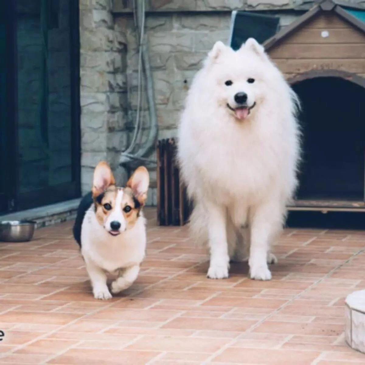 河南或将禁养50犬种,违规最高罚1万!您怎么看?