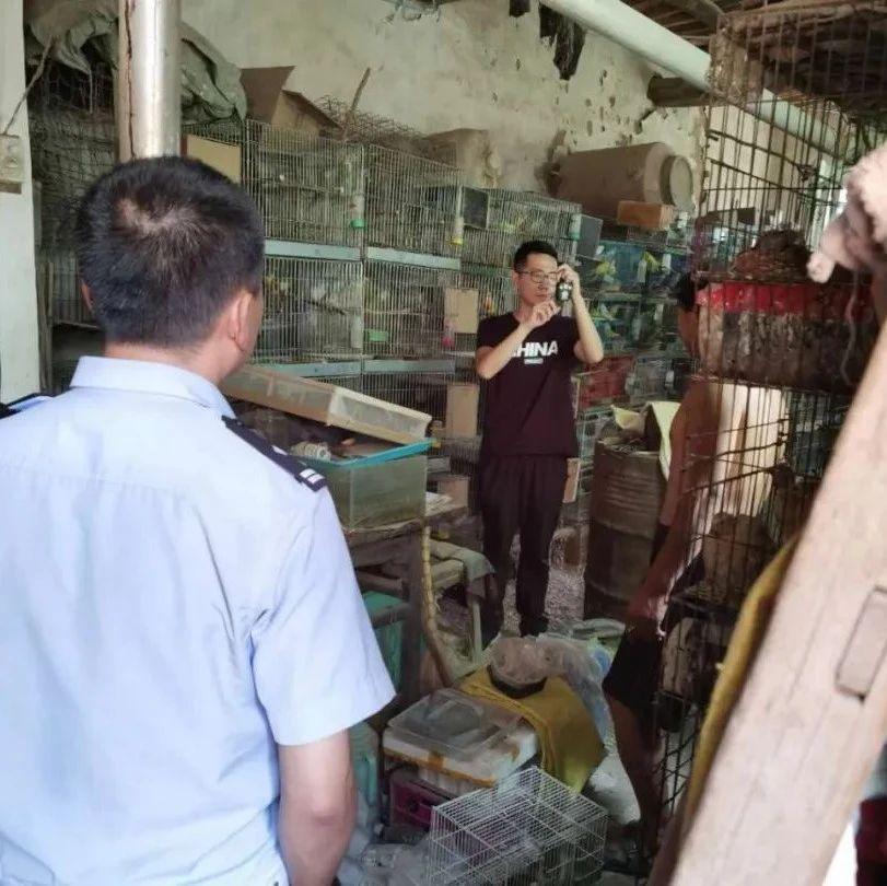 前孙庄村孙某于疫情期间在某平台直播售卖野生动物!蓝孔雀、环颈雉等共计63只野生动物被没收