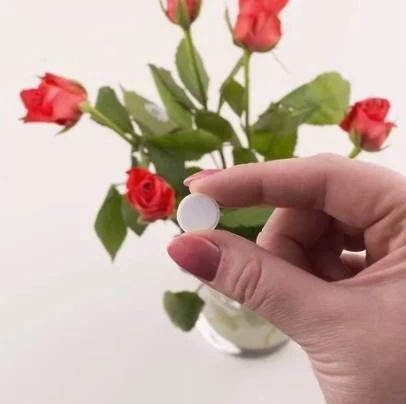 过期的药片丢花盆里,花都长疯了,植物再也不发黄!
