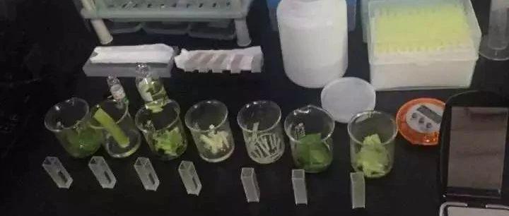 【抽检快报】2021年1月6日上午食品快速检测结果公布