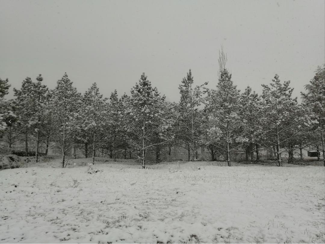 四月飘雪!陕西多地下起中雪!未来几天更刺激......