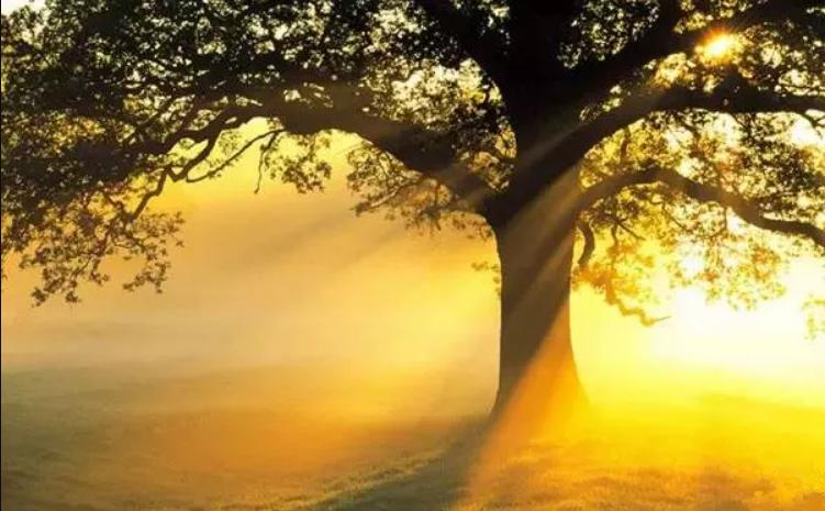 植树节|人与树的自然史诗