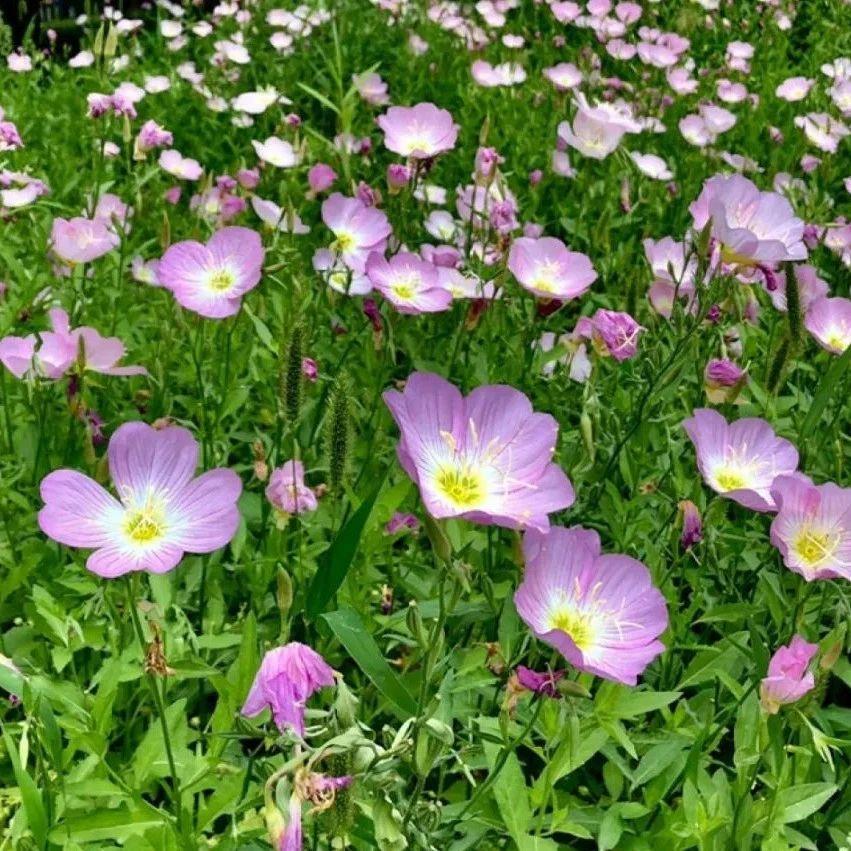 郑州爱花的你快收好!100种花卉图谱,保你啥花都认识!