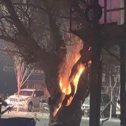 【城事】危险!澳门金沙城中心某路口的枯树突然从中间开始燃烧,直窜高空,差点就......