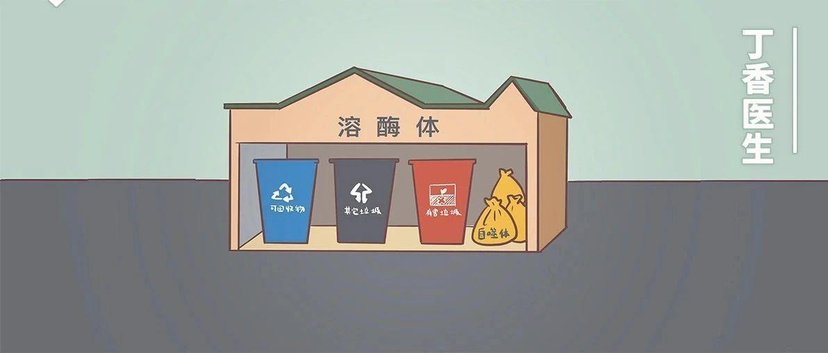 人的�胞里,竟然有垃圾回收站,可能是保持年�p的�P�I