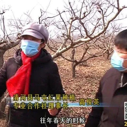 今年在疫情期间,清河马屯山楂林的春耕情况又是否受到了影响呢?