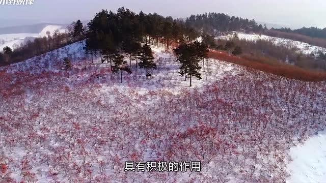 【视频】2018沙棘中国梦