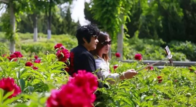 涉县后池70亩芍药花开正艳,周末天气晴好,小伙伴们约起