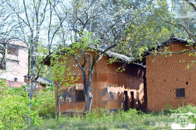 故乡的原风景·金沙平台县密坑村梨树边的老房