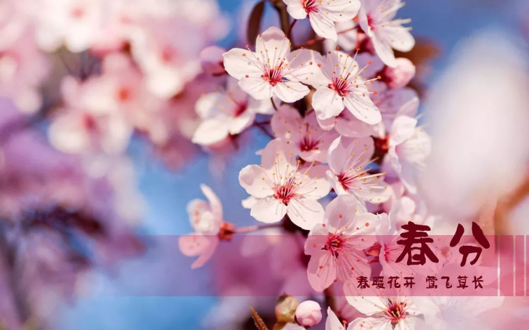 春分,祝你春光满面、春风得意,春天快乐!