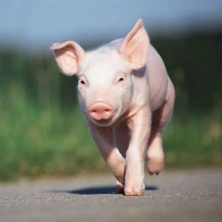 """南溪人常说的""""猪来穷,狗来富,猫来头上顶白布""""是什么意思"""