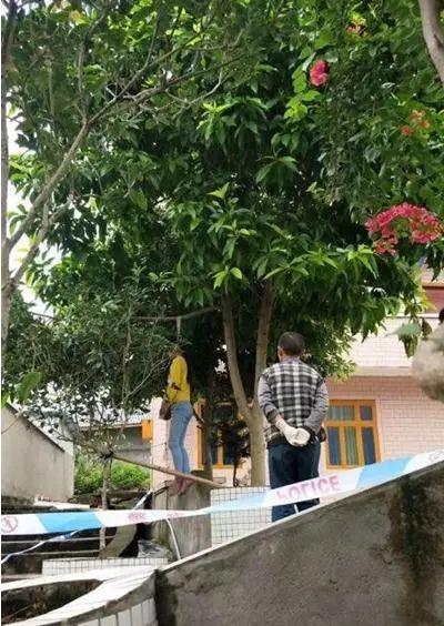 悲痛!12岁少女在门前大树上吊自杀(附视频)