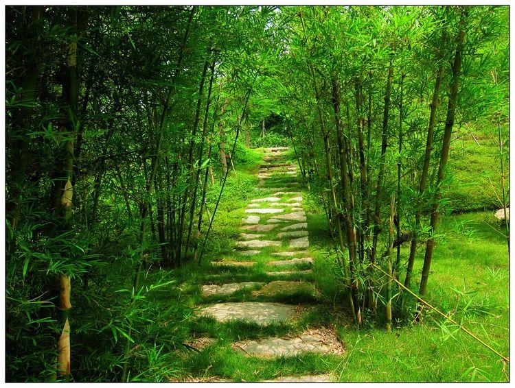 南溪将有一条绿色风景线……