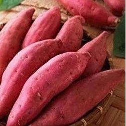 天冷红薯不易保存,教你1招,红薯越放越甜,保存一年都不坏