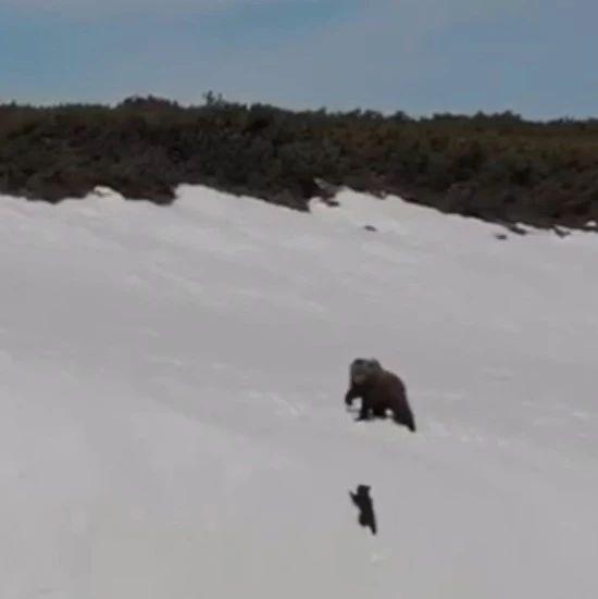 """""""熊孩子""""爬雪山的视频刷屏:生活不易,要么,再试一次?"""