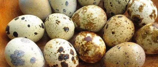 ※鹌鹑蛋也是一味中药,长期这样吃好处太多了!