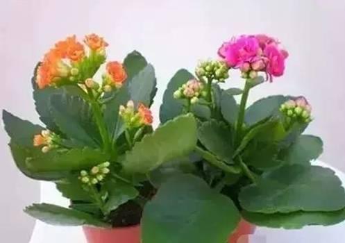 献给那些养花却总是把花养死的人【超实用】 - 云鹏润峰 - 云鹏潤峰