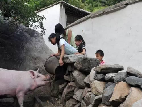 那些年,在农村吃过的苦...看哭了99%的凤冈人!