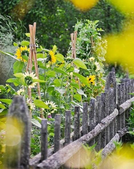 人人都想有个菜园子...