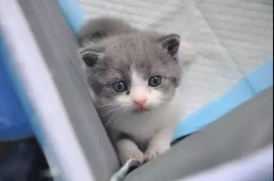 """花25万""""复活""""的猫,跟原来的完全一样吗?结果出人意料"""