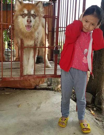女儿看到大狗就想上去拍个照,结果这表情,笑疯了...