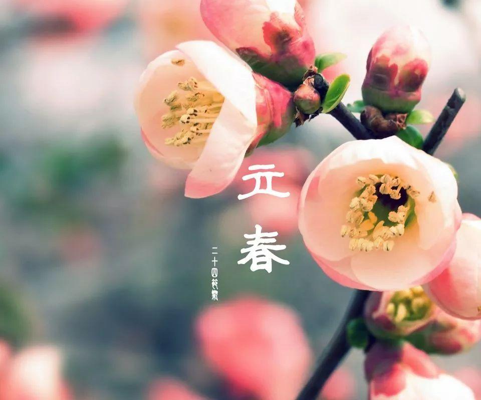 立春|一切�K���^去,�o候春暖花�_!