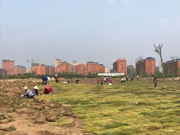 澳门太阳城官网又建了一个新公园?你知道在哪吗?