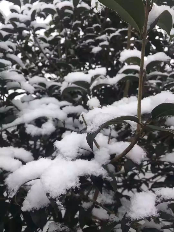 初雪算什么?澳门太阳城官网直接下冰雹!头都砸起包....