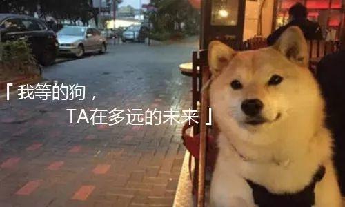 """【七夕街拍】找个没人的地方悄悄看看这些""""神回复""""!"""