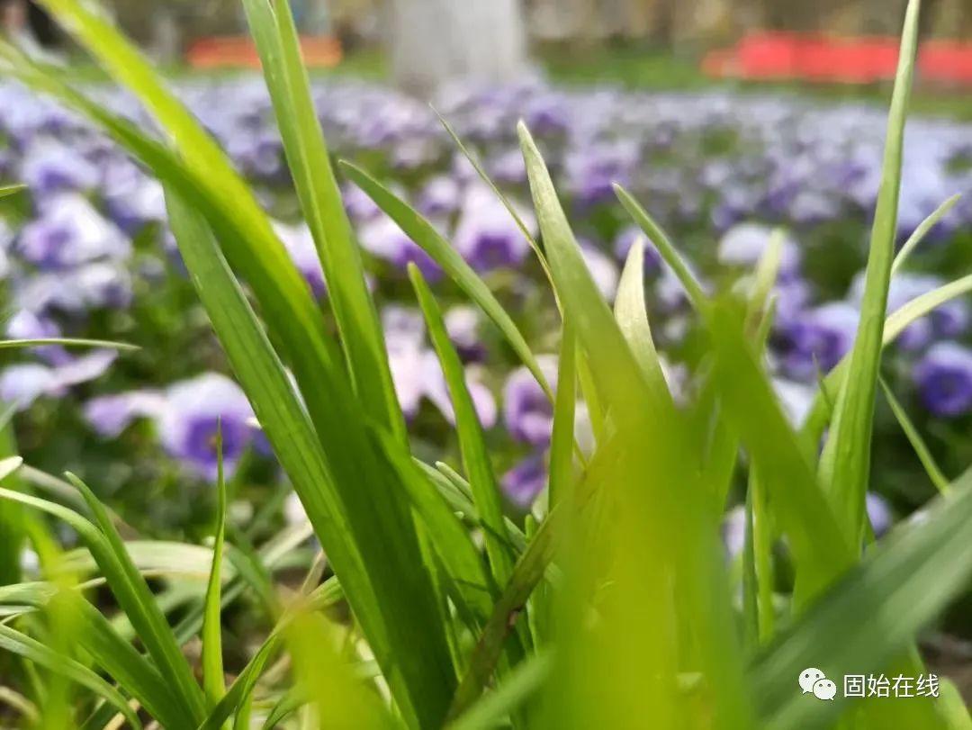 固始人的春天,吃�^�@7道美食,人生才算完整!