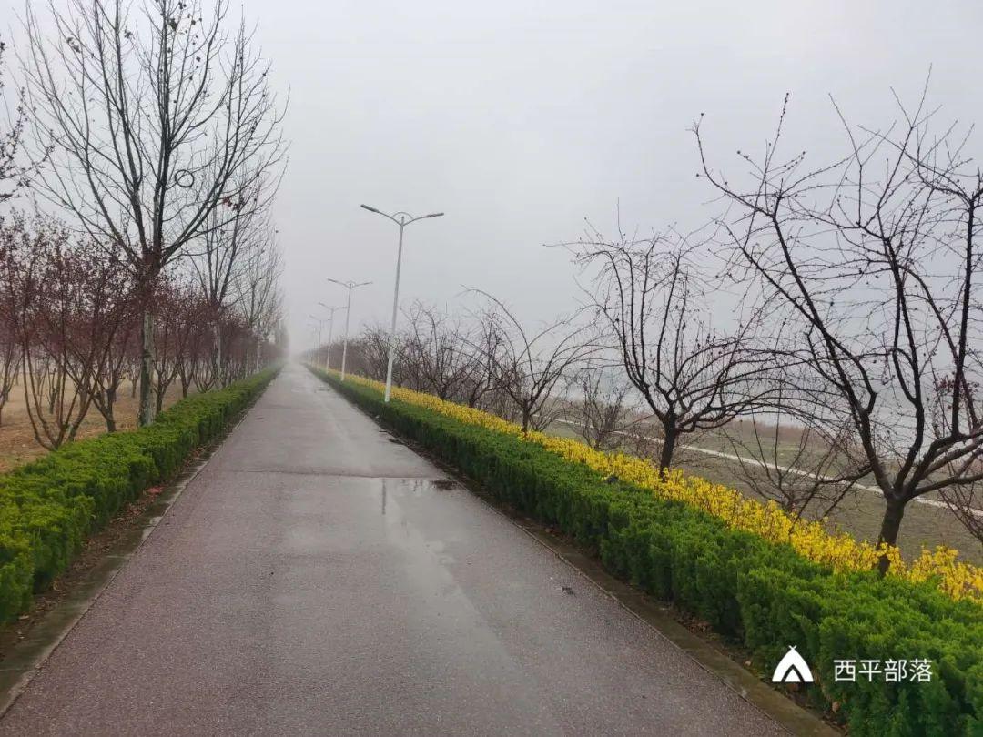 迎春花开!雨中垂钓!西平的公园、河边美成一道风景!