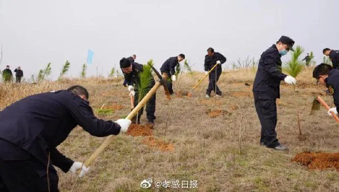 计划造林4.4万亩!大悟全员造林提升绿色颜值