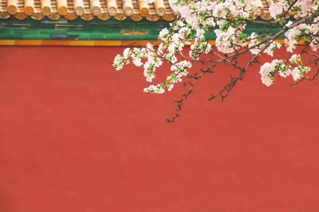 春天拍照攻略,让你的照片好看100倍