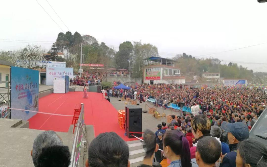 梨花仙子来了!数万人挤爆仁寿曹家梨花节。