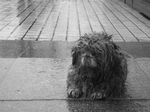下雨天,两只流浪狗宝宝上门讨食,却不敢叫出声……