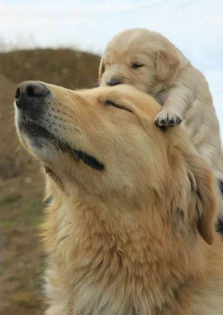 奶狗和�H爹的日常,相�起�硪沧�人抓狂!