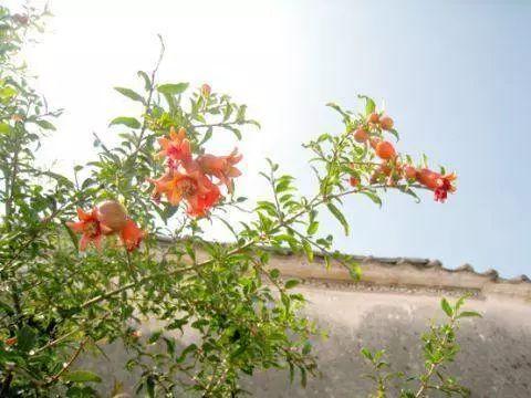 七月七|出花园潮汕人特有的成人礼