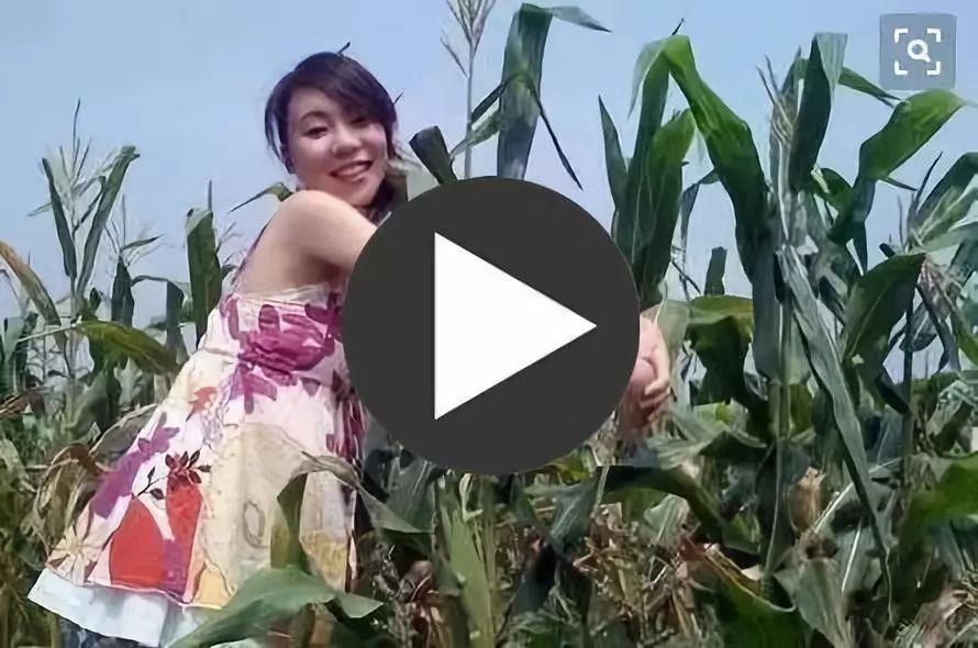 在农村玉米地的视频,一夜火了!