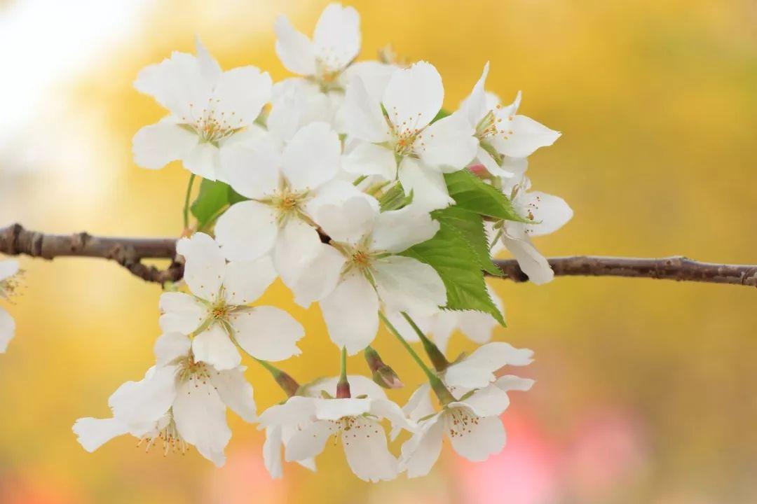 三月,再见!四月,你好!