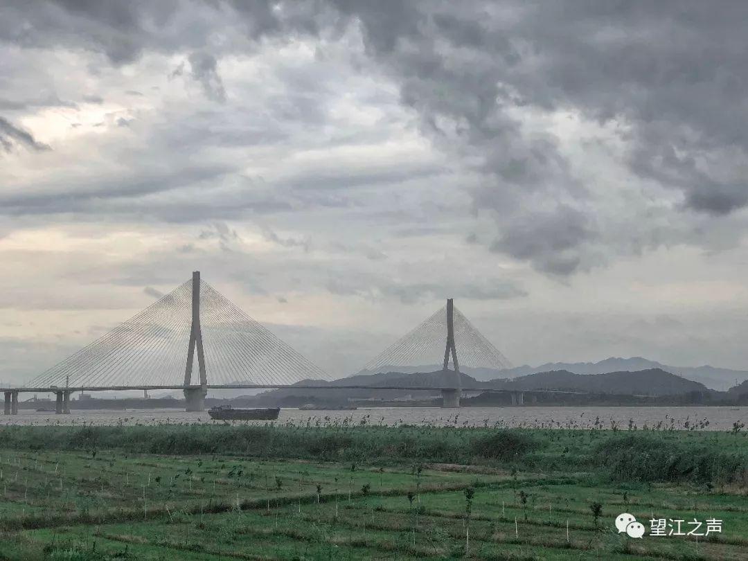 【安庆日报头版】望江2.3万亩江滩复绿